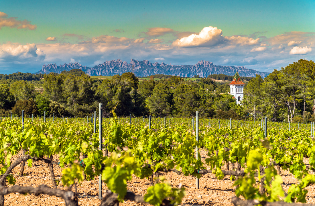 Essential Wine Tour of Spain & France