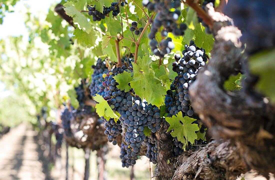 Wine Lovers Tour of Portugal, Spain & France