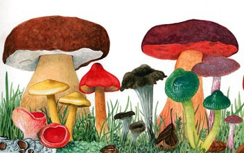 It's not all about looking pretty, as not all the wild mushrooms you will find are edible. It is wise to go with an expert!