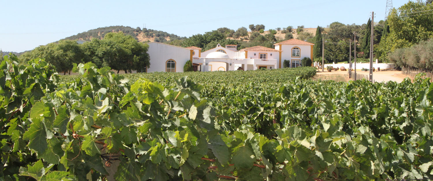 Independent Wine Culture Tour Of Portugal